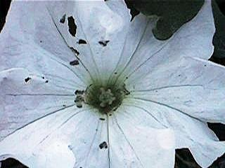 Flower before repair