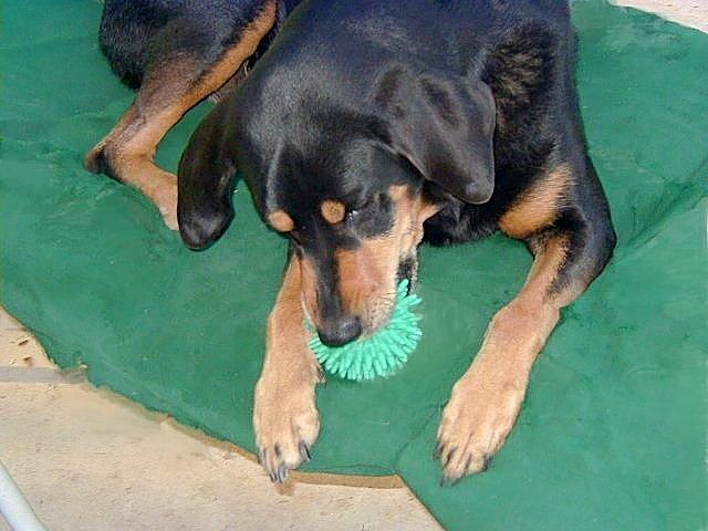 Dog after restoring